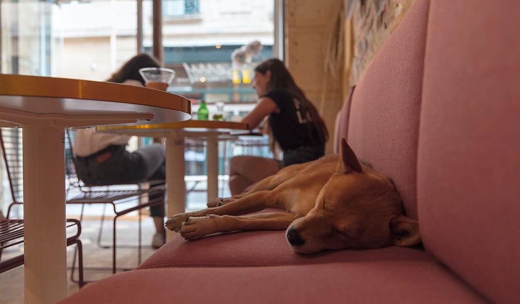 sleeping-dog-restaurant
