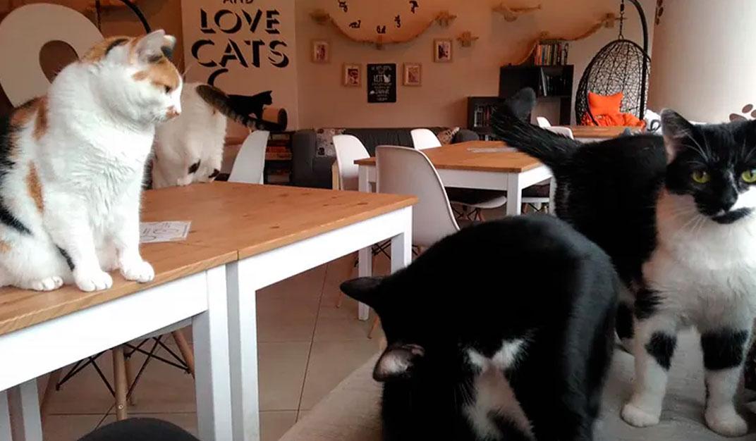 white-cat-cafe-gdynia